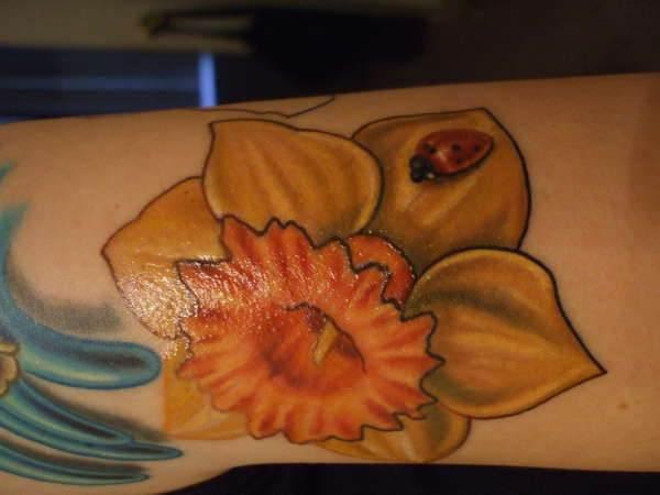 Daffodil Tattoo Images