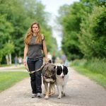 How to Deal with Bad Behaviour in Dogs
